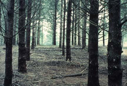 Where it can be seen that a tree farm is not a forest and tree farm floor is not a forest floor.